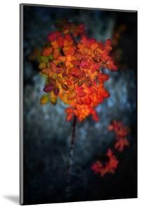 Wild Rose Bush in October by Ursula Abresch