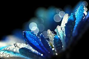 Winter Blues by Ursula Abresch