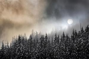 Winter Sun by Ursula Abresch