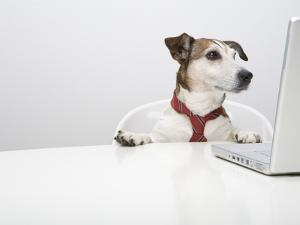 Dog in Front of Laptop at Desk by Ursula Klawitter