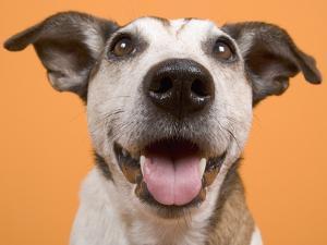 Dog by Ursula Klawitter