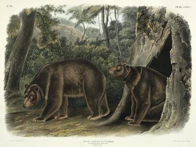 Ursus Americanus, Var. Cinnamonum (Cinnamon Bear), Plate 127 from 'Quadrupeds of North America',…-John Woodhouse Audubon-Giclee Print