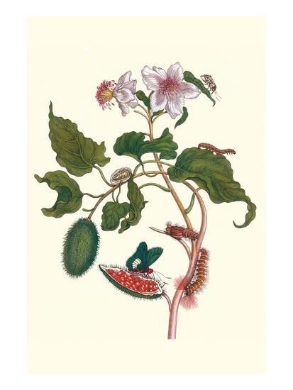 Urucu Tree a Phidias Firetip Butterfly-Maria Sibylla Merian-Art Print