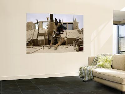 US Air Force Military Working Dog Sits on a US Army M2A3 Bradley Fighting Vehicle--Wall Mural