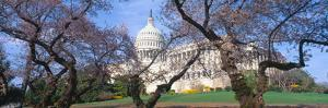Us Capitol Building and Cherry Blossoms, Washington Dc