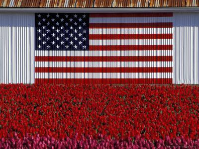 US Flag on Barn and Tulip Field, Skagit Valley, Washington, USA-William Sutton-Photographic Print