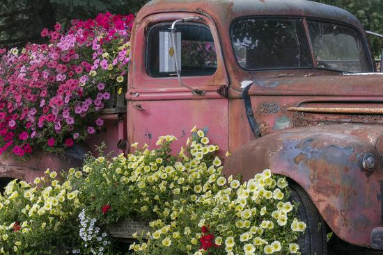 Usa Alaska Chena Hot Springs Old Truck And Flowers Photographic