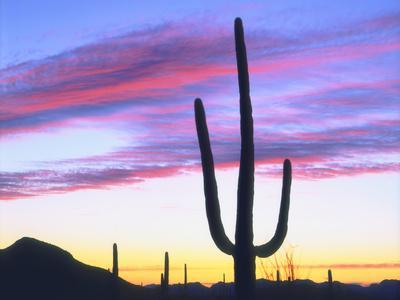 https://imgc.artprintimages.com/img/print/usa-arizona-a-saguaro-cactus-at-dusk_u-l-pqei9b0.jpg?p=0