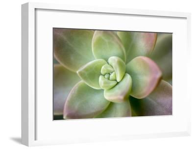 USA, Arizona. Detail of succulent plant.-Jaynes Gallery-Framed Photographic Print