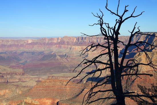 USA, Arizona, Grand Canyon. the Grand Canyon, View from the South Rim-Kymri Wilt-Photographic Print