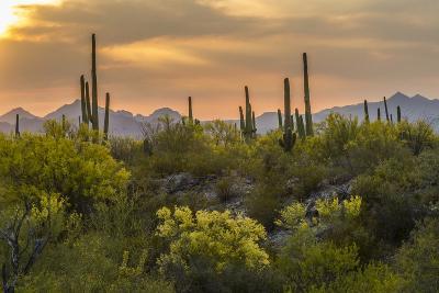 USA, Arizona, Saguaro National Park. Desert Landscape-Cathy & Gordon Illg-Photographic Print