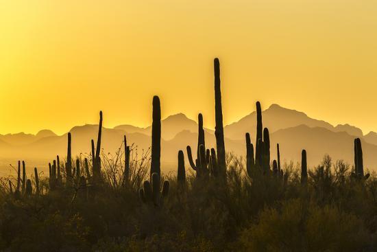 USA, Arizona, Saguaro National Park. Sonoran Desert at sunset.-Jaynes Gallery-Premium Photographic Print