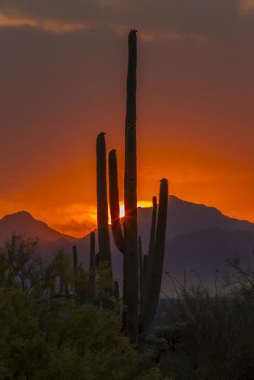 USA, Arizona, Saguaro National Park. Sunset on Desert Landscape-Cathy & Gordon Illg-Photographic Print