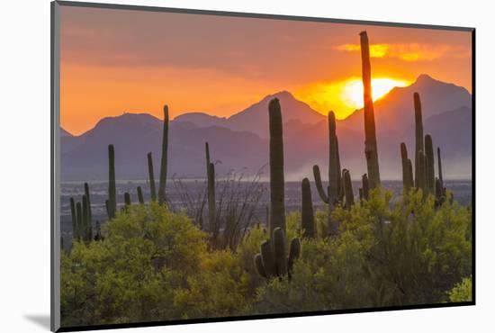 USA, Arizona, Saguaro National Park. Sunset on Desert Landscape-Cathy & Gordon Illg-Mounted Photographic Print