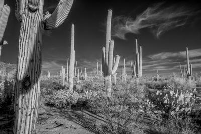 https://imgc.artprintimages.com/img/print/usa-arizona-tucson-saguaro-national-park_u-l-q1d0j9v0.jpg?p=0