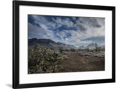 USA, Arizona, Tucson, Tucson Mountain Park-Peter Hawkins-Framed Photographic Print