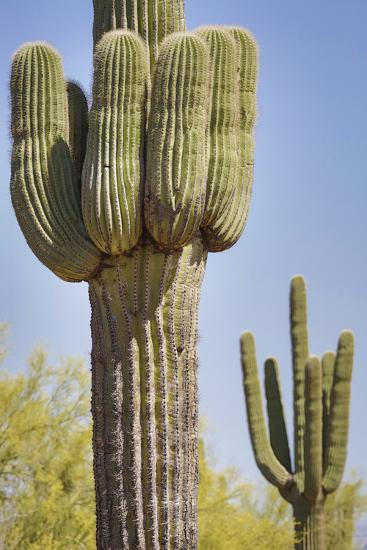 USA, Arizona, White Tank Mountain Park, Phoenix. Close-up of a Saguaro cactus.-Deborah Winchester-Photographic Print