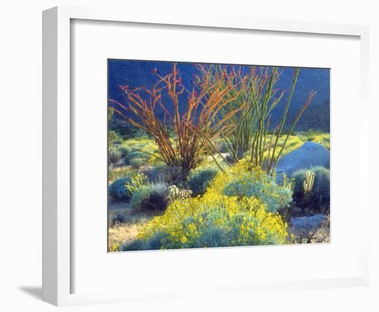 USA, California, Anza-Borrego Desert State Park. Blooming Ocotillo-Jaynes Gallery-Framed Photographic Print