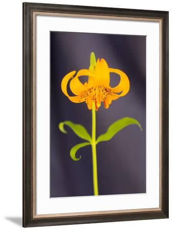 USA, California, Crescent City, Flower-Hollice Looney-Framed Premium Photographic Print
