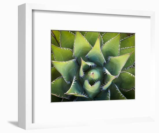 Usa, California, Joshua Tree. Agave cactus, viewed from above.-Merrill Images-Framed Photographic Print