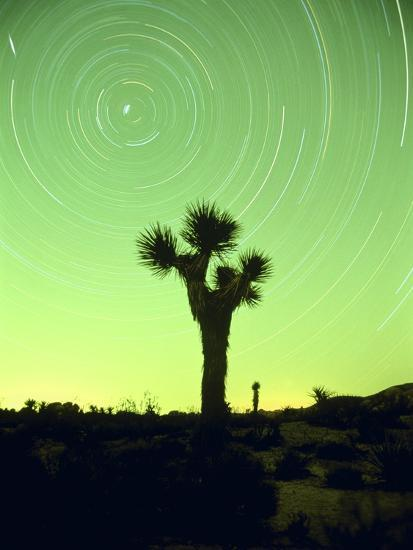 USA, California, Joshua Tree National Park and star trails at night-Frank Lukasseck-Photographic Print
