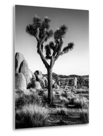 USA, California, Joshua Tree National Park at Hidden Valley-Ann Collins-Metal Print
