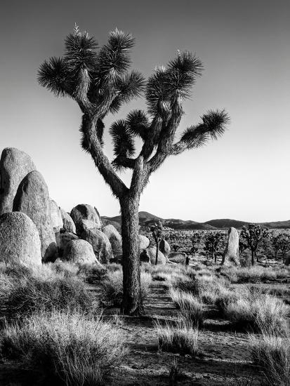 USA, California, Joshua Tree National Park at Hidden Valley-Ann Collins-Photographic Print