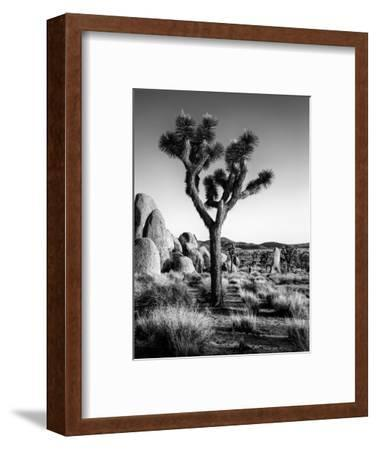 USA, California, Joshua Tree National Park at Hidden Valley-Ann Collins-Framed Photographic Print