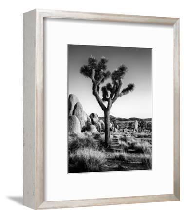 USA, California, Joshua Tree National Park at Hidden Valley-Ann Collins-Framed Photographic Print
