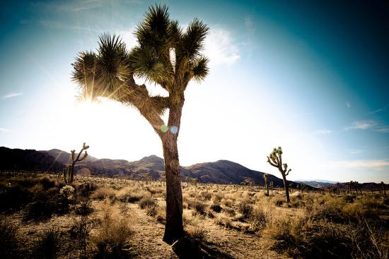 Usa, California, Joshua Tree National Park, Hidden Valley, Joshua Trees-Sergio Pitamitz-Photographic Print