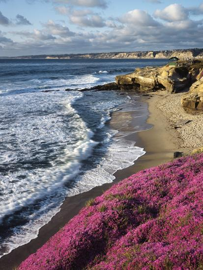 USA, California, La Jolla, Flowers Along the Pacific Coast-Christopher Talbot Frank-Photographic Print