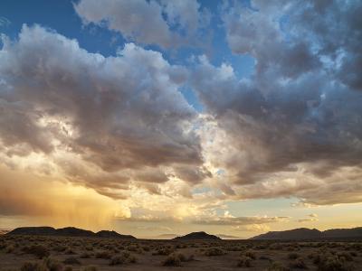 USA, California, Mojave National Preserve. Desert Rain Squall at Sunset-Ann Collins-Photographic Print