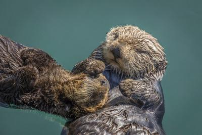 https://imgc.artprintimages.com/img/print/usa-california-morro-bay-state-park-sea-otter-mother-with-pup_u-l-q1d0abf0.jpg?p=0