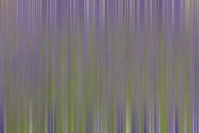 https://imgc.artprintimages.com/img/print/usa-california-napa-valley-abstract-of-blooming-lupine-flowers_u-l-q1gchv00.jpg?p=0