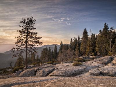 USA, California, Sequoia National Park. Sunset Near Beetle Rock Education Center-Ann Collins-Photographic Print