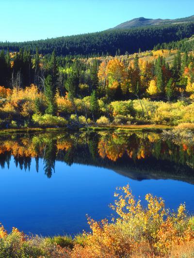 USA, California, Sierra Nevada. Autumn Reflection in a Beaver Pond-Jaynes Gallery-Photographic Print