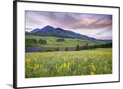 USA, Colorado, Crested Butte. Landscape of wildflowers and mountain.-Dennis Flaherty-Framed Photographic Print