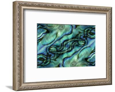 USA, Colorado, Lafayette. Abalone Shell Montage-Jaynes Gallery-Framed Photographic Print