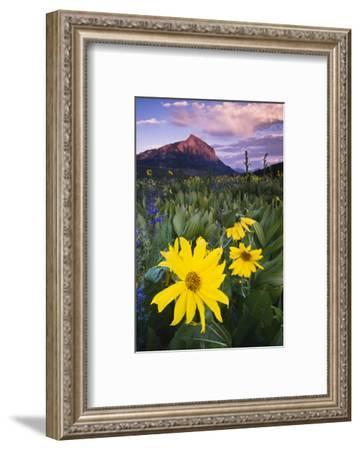 USA, Colorado, Mt. Crested Butte. Meadow Wildflowers at Sunset-Jaynes Gallery-Framed Photographic Print
