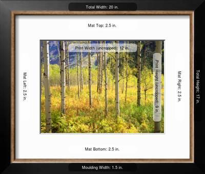 Usa Colorado Rocky Mountains Aspen Trees In Autumn In The Rockies Photographic Print Jaynes Gallery Art Com