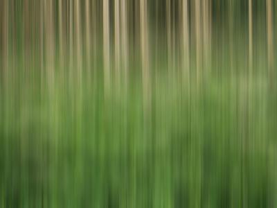 https://imgc.artprintimages.com/img/print/usa-colorado-san-juan-mountains-aspen-grove-abstract_u-l-q1gc2o60.jpg?p=0