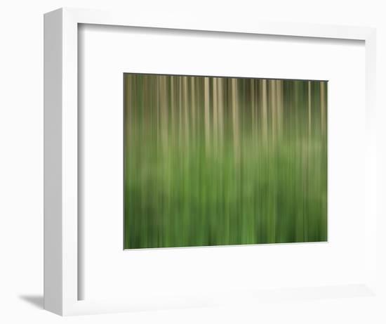 USA, Colorado, San Juan Mountains. Aspen grove abstract.-Jaynes Gallery-Framed Photographic Print