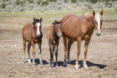 https://imgc.artprintimages.com/img/print/usa-colorado-san-luis-wild-horse-adult-and-foals_u-l-q1gcfru0.jpg?p=0