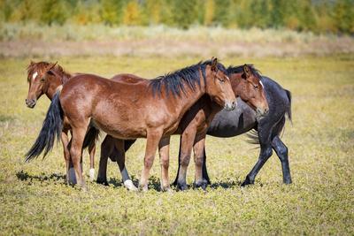 https://imgc.artprintimages.com/img/print/usa-colorado-san-luis-wild-horse-herd_u-l-q1gbwho0.jpg?p=0