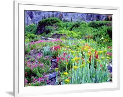 USA, Colorado, Wildflowers in Yankee Boy Basin in the Rocky Mountains-Jaynes Gallery-Framed Photographic Print