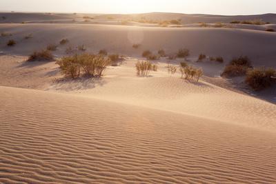 https://imgc.artprintimages.com/img/print/usa-death-valley-national-park-mesquite-flat-sand-dunes_u-l-q11wz6r0.jpg?p=0