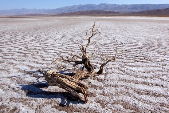 USA, Death Valley National Park, Salt Creek-Catharina Lux-Photographic Print