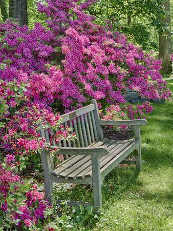 https://imgc.artprintimages.com/img/print/usa-delaware-a-dedication-bench-surrounded-by-azaleas-in-a-garden_u-l-q1gtneq0.jpg?p=0