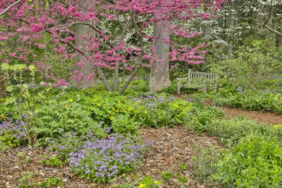 USA, Delaware, Hockessin. Flowering dogwood in the forest-Hollice Looney-Photographic Print