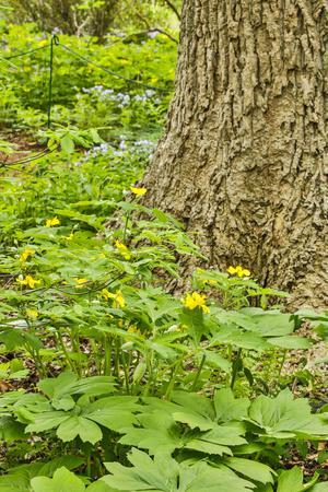 https://imgc.artprintimages.com/img/print/usa-delaware-hockessin-plants-surrounding-the-tree-trunk_u-l-q1gcjru0.jpg?p=0